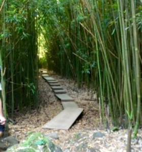 The bamboo forest in Hana